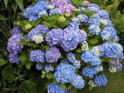 florandia 3
