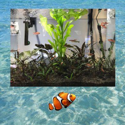 aquaria piagentina